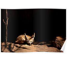 ~Sleeping Little Fennec Fox~ Poster