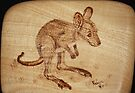 Eastern Grey Kangaroo Joey on Silver Ash by aussiebushstick