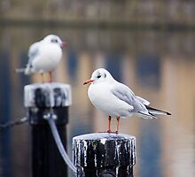 Gulls At The Shore by Lynne Morris