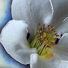 Japonica by Lynne Kells (earthangel)