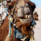 Camel in Tunisia by philrwesty
