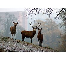 Deer in the City Photographic Print