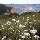 Fortress Ridge Flora by Geoff Smith