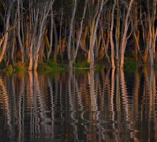 Mangroves at sunset Hunter River, Hexham (Newcastle) Australia by Chris Prior