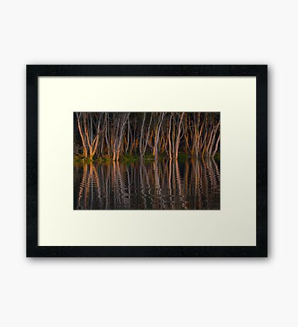 Mangroves at sunset Hunter River, Hexham (Newcastle) Australia Framed Print