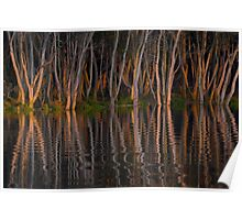 Mangroves at sunset Hunter River, Hexham (Newcastle) Australia Poster