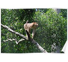 Macaque Monkey Poster
