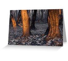 Australian bushfire aftermath Greeting Card