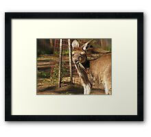 Taking a quick snack Framed Print