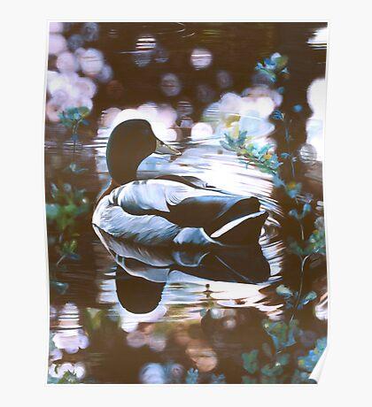 """Mallard"" - oil painting of a Mallard duck Poster"