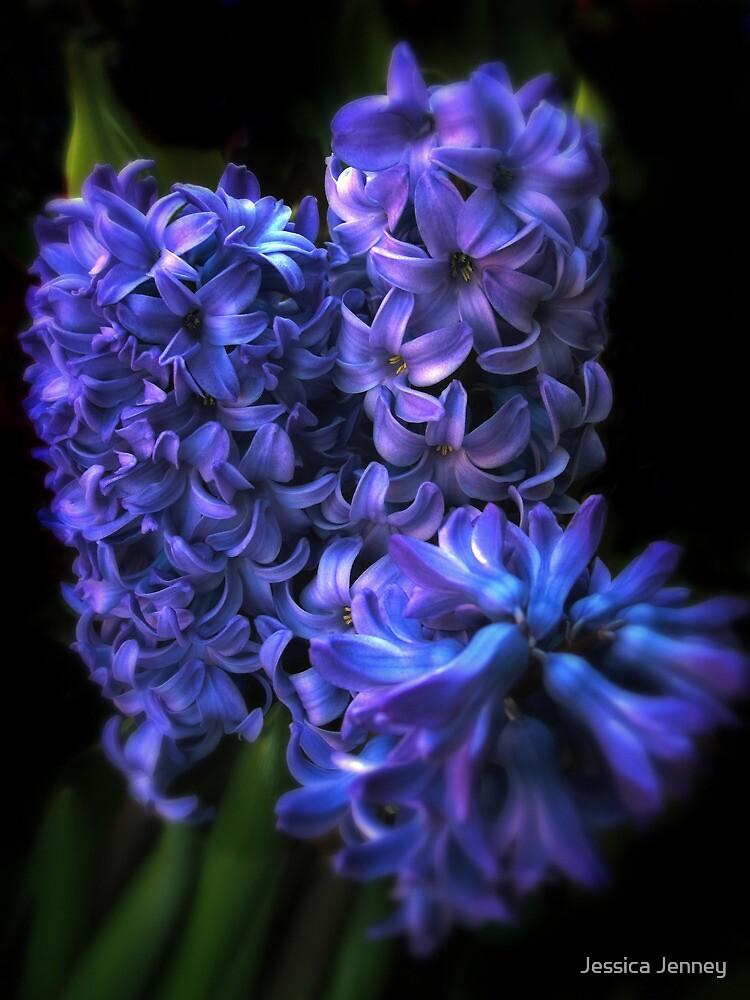 Blue Hyacinth by Jessica Jenney