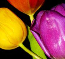 Tulips on Black Sticker