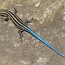 Blue Tailed Lizard I by Jean Gregory  Evans