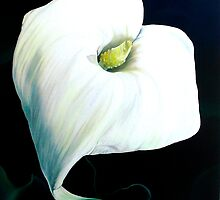 """Etherialily"" white lily on a dark background by James  Knowles"