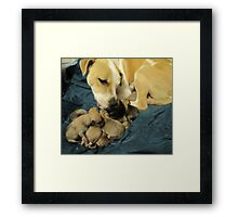 jerzy and her 11 pups Framed Print
