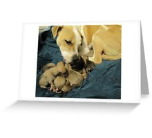 jerzy and her 11 pups Greeting Card