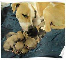 jerzy and her 11 pups Poster
