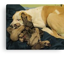 jerzy and babies Canvas Print