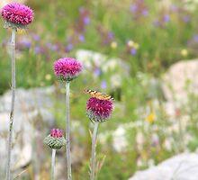 Butterfly in Croatia by matt25od88