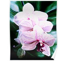 """Orchid"" - pale pink orchid flowers Poster"