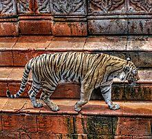 Tiger @ Animal Kingdom by BreakerSteve