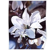 """Magnolia"" - oil painting of a white magnolia tree blossoms Poster"