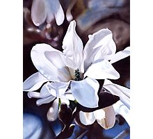 """""""Magnolia"""" - oil painting of a white magnolia tree blossoms Photographic Print"""