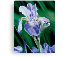 """Iris"" - oil painting of an Iris Canvas Print"