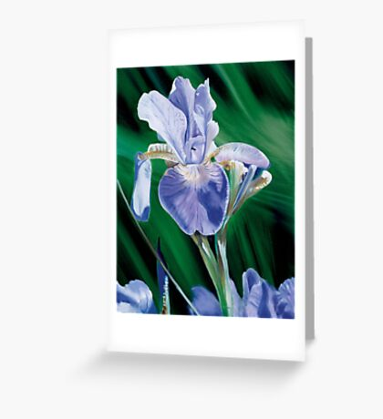 """Iris"" - oil painting of an Iris Greeting Card"