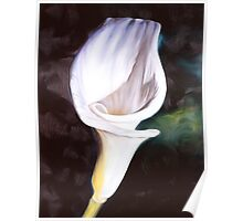 """Virgin Lily"" - oil painting of a pure white lily flower Poster"