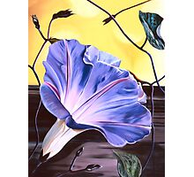 """Morning Glory"" - oil painting of a purple-blue trumpet shaped flower Photographic Print"