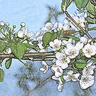 Stone Pear in Bloom by T. Thornton