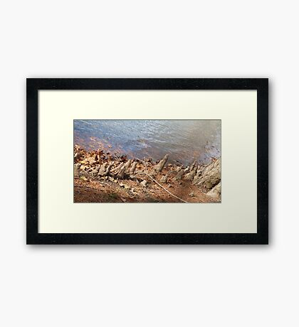 Roots by the water Framed Print