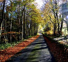 Tree Lined Driveway to Woodstock.. by eithnemythen