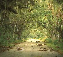 The green sky  over the Everglades, Florida by Marie Luise  Strohmenger