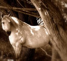 """Old Grey Mare"" by Breanna Stewart"