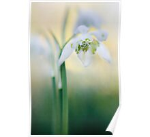 A flower in spring Poster