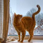 Curious ginger cat on window sill by Marco Dall'Omo