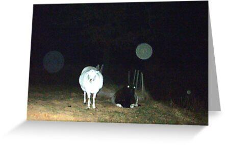 Angels,Nimbus And Sheep by PaulCoover