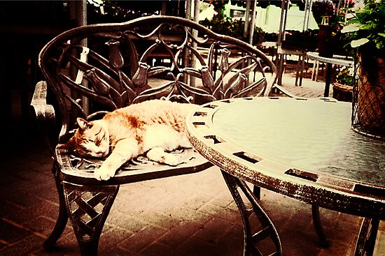 A Cat Nap  by susan stone