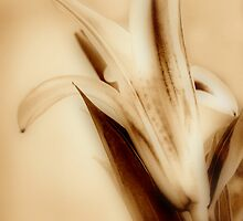 Sepia Lily by Karen Martin