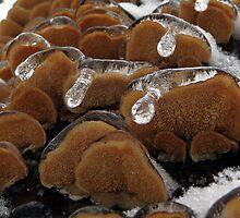 Dripping Ice - The underside by Marcia Rubin