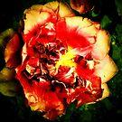 The  mysterious  fiery tulip  by kindangel