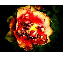 The  mysterious  fiery tulip  Photographic Print