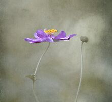 Silent dancer by Maria Ismanah Schulze-Vorberg