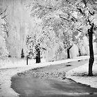 The Path by olga zamora