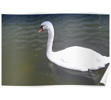 Gliding swan Poster