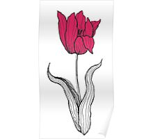 The Amazing Tulip in Bloom Poster
