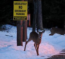 Absolutely No Overnight Parking by Diane Blastorah