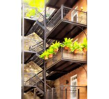 Flower Pots on Staircase Photographic Print